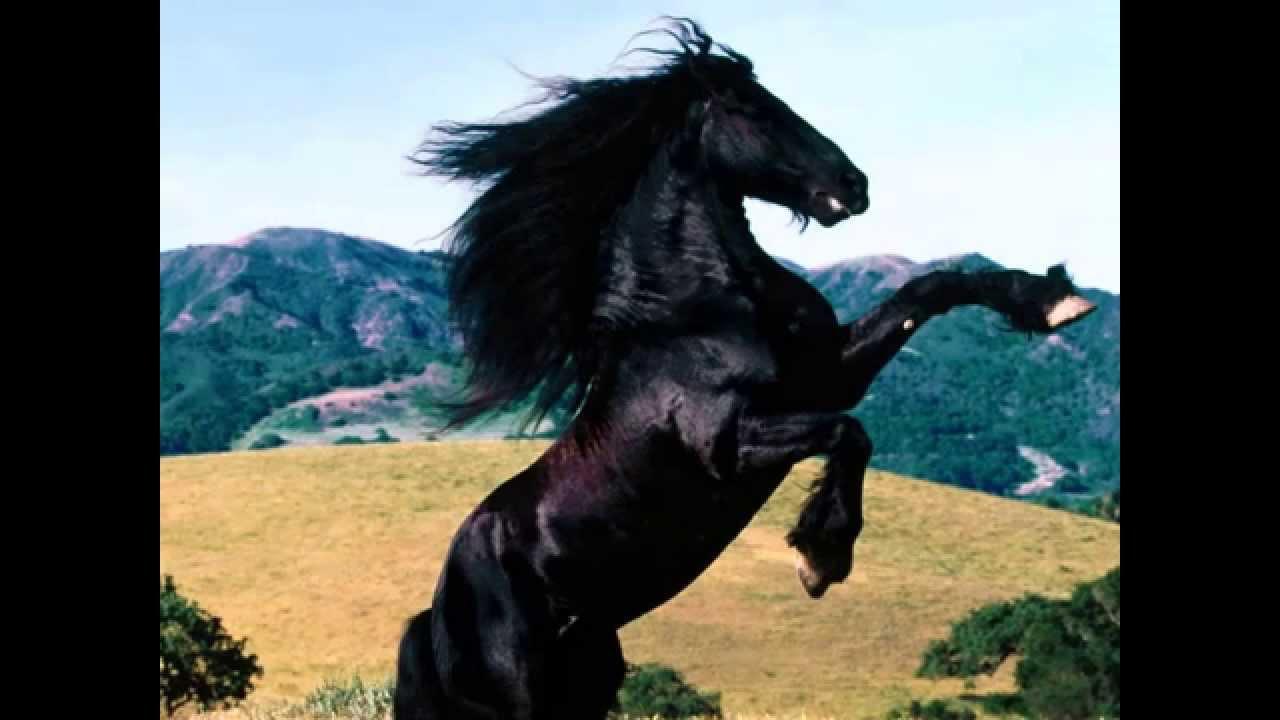 mal furia cavallo del west youtube