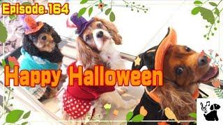 Happy Halloween♪ ハロウィンのコスプレしてみました。 おもしろ可愛い...