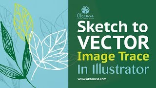 How to live trace in Illustrator. Turn a sketch into vector elements Adobe Illustrator CC tutorial.