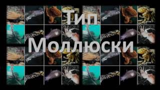 7. Тип Моллюски (экспресс Зоология) подготовка к ОГЭ и ЕГЭ Биология