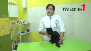 Почему кошки кашляют. ВИДЕО