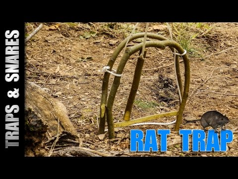 how to make a rodent trap