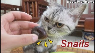 Cat Meet Snails Again | Best Funny Cat With Snail 2018