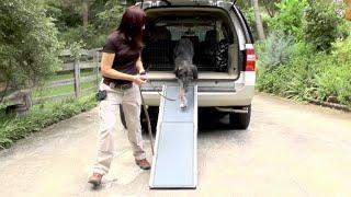 Dog Training, Gus And Dex: Ramp Car Manners, Off Leash Training, Fun
