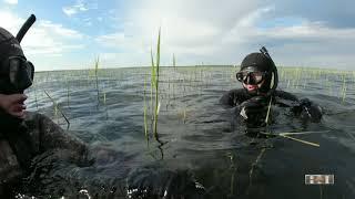 Подводная охота на леща