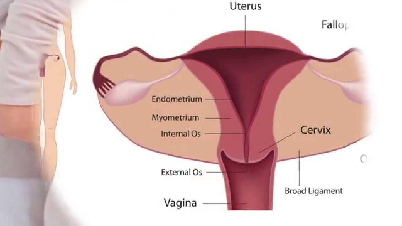 Fertility Massage Overview