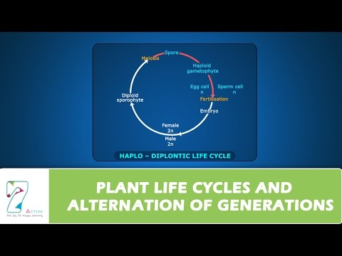 PLANT LIFE CYCLES AND ALTERNATION OF GENERATIONS