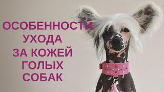 Особенности ухода за кожей голых собак