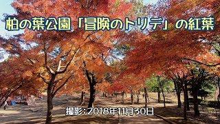柏の葉公園「冒険のトリデ」の紅葉 [4K] thumbnail
