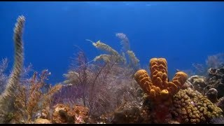 World's Largest Coral Expedition - The Global Reef Expedition: Bahamas