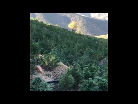 Marijuana mountain in Morocco