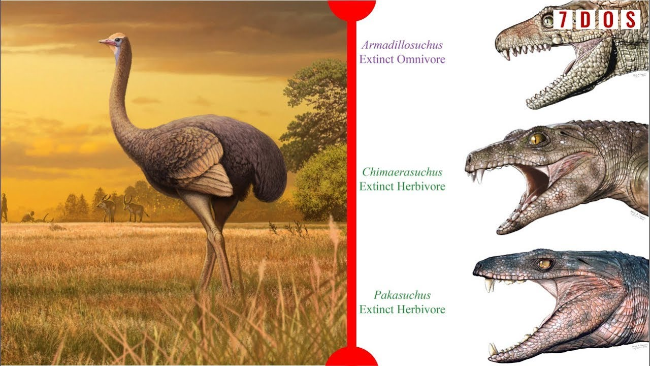 Herbivorous Crocodyliforms & A Giant Prehistoric Bird Discovered - 7 Days of Science