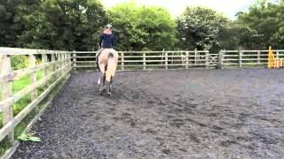 Ronnie - Top Quality Fun Horse