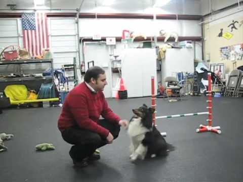 30 Fun & Simple Dog Tricks
