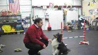 30 Fun & Simple Dog Tricks