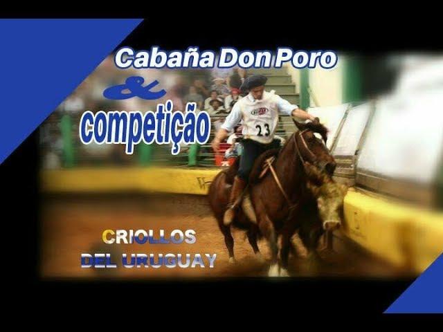 Criollos Don Poro - Parte I