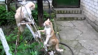 Кошки дерутся на лестнице