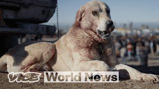 Inside Iraqi Kurdistan's Bloody Dogfighting Scene