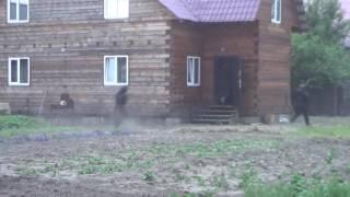 Нападение на павильон в Иркутске