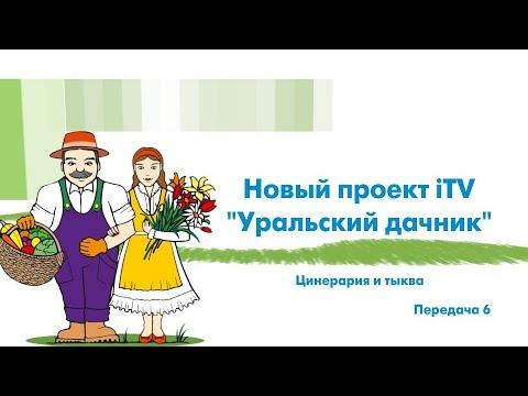 «Уральский дачник» - Цинерария, тыква. ITV-Миасс. 14 апреля 2018