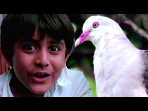 Bollywood Full Movies – Ankur Maina Aur Kabootar - Hindi Dubbed Full Movies - Kids Jungle Birds Film