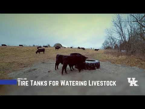 Tire Tanks for Watering Livestock