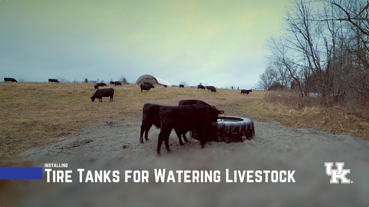 Tire Tanks for Watering Livestock