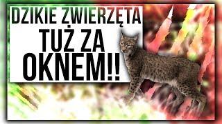 DZIKIE ZWIERZĘTA TUŻ ZA OKNEM🐱 /Dom na Florydzie/203