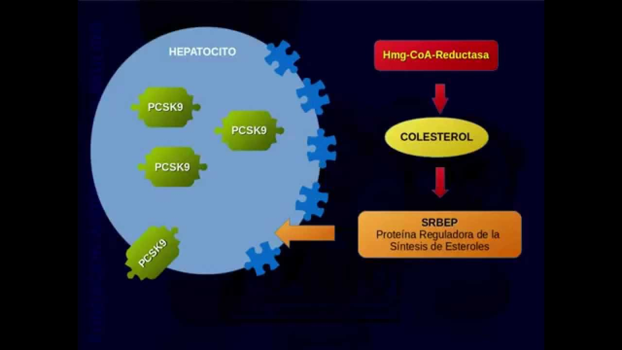 Inhibidores de pcsk9 animacion simple - YouTube