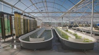 Could microalgae transform our food and cosmetics industries?