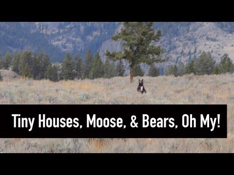Part 4: Grand Tetons and Yellowstone