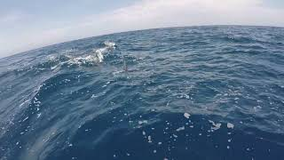 2019 Bisbee's East Cape Offshore | TAG Team | Blue Marlin