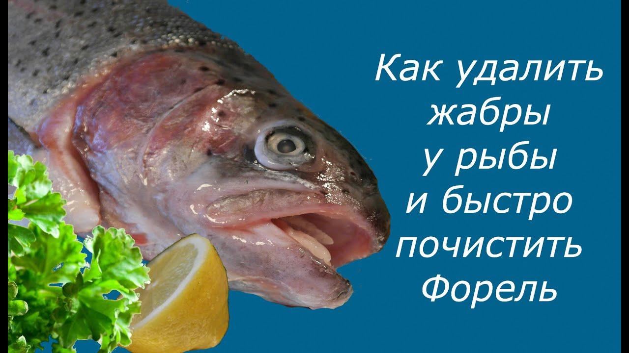 Разделка рыбы. Как удалить жабры у рыбы и быстро почистить Форель