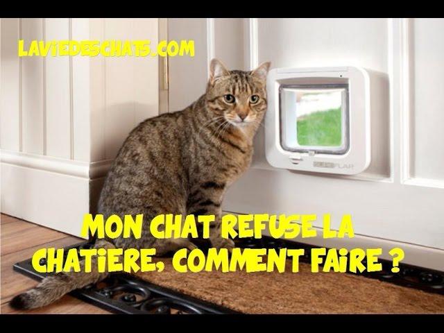 Mon Chat Refuse La Chatiere Comment Faire Youtube