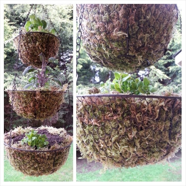 DIY: 3 Tier Hanging Herb Garden
