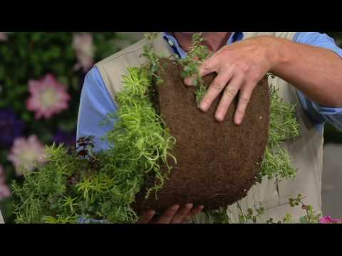 Roberta 39 S Cut And Plant Coco Fiber Succulent Landscape On