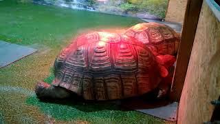 Мир черепах / Огромные черепахи долгожители