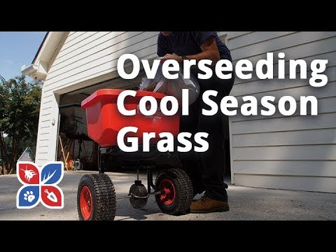 Do My Own Lawn Care - Overseeding Cool Season Grasses - Ep33