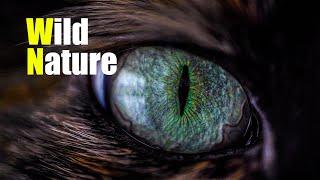 Wild Nature | Дика природа
