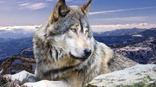 Дикая природа Дикий запад Звериный вестерн National Geographic Wild