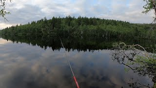 СБЕГАЛ НА ЛЕСНОЕ ОЗЕРО ЗА КУМЖЕЙ И ОКУНЕМ I RAN TO THE FOREST LAKE FOR TROUT AND PERCH