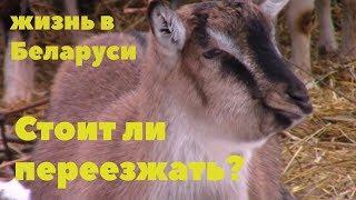 Про жизнь в Беларуси и переезд