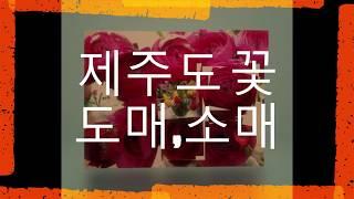 제주도꽃도매,에덴 꽃 프라자,꽃도매,꽃,에덴프라자