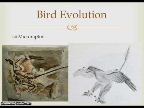 Facts of Evolution - Paleontology