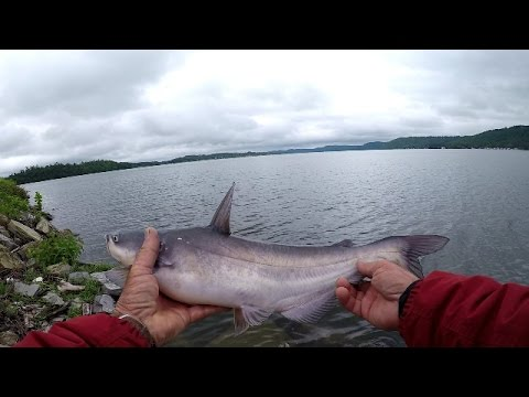 Video Catfishing with worms