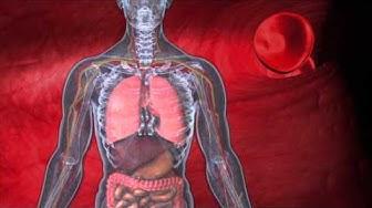 MediQUANT - Bemer Mikrozirkulation - Bessere Versorgung von Organen und Geweben