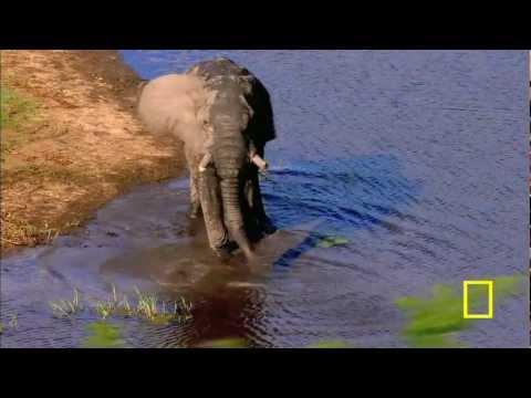 Gorongosa National Park - Promo