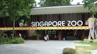 Top 10 Best Zoos In The World