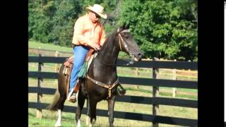 Fat Fred Beginners Guests Grandma SAFE Tennessee Walking Trail Horse Deluxe For Sale