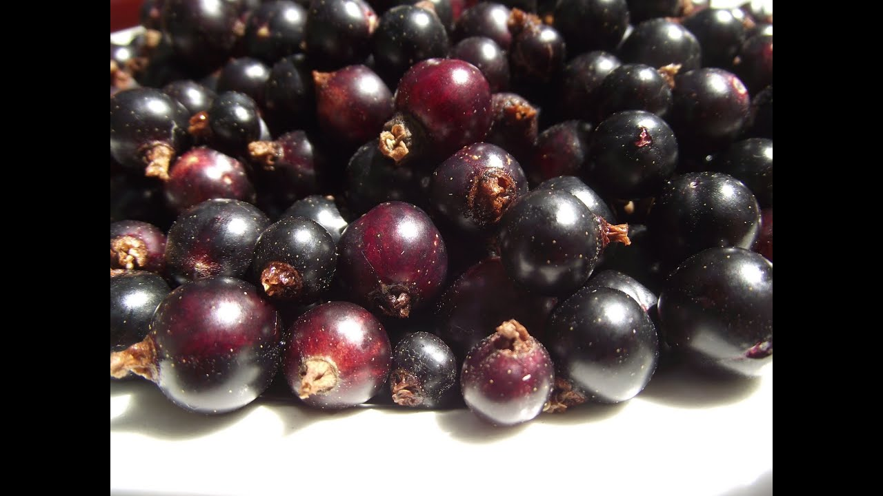 How To Make Blackcurrant Jam